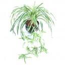 Chlorophytum artificiel 80cm sur pique