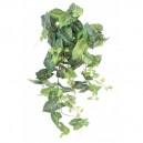 Syngonium artificiel 70cm 155 feuilles sur pique