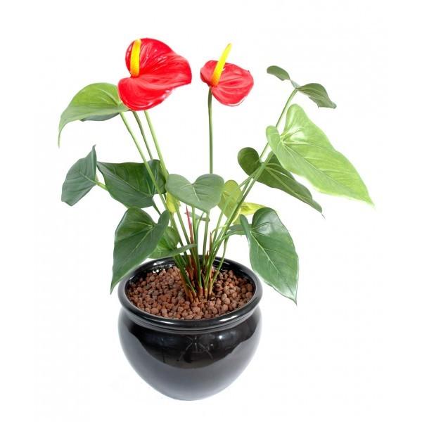 Anthurium artificiel 45cm 2 fleurs sur pique mat riel for Flowall pas cher