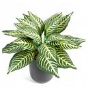 Aphelandra mini artificiel 25cm 24 feuilles sur pique