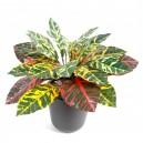 Croton mini artificiel 25cm 24 feuilles sur pique
