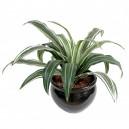 Dracaena warneckii artificiel 35cm 20 feuilles sur pique