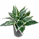 Hosta mini artificiel 25cm 24 feuilles sur pique