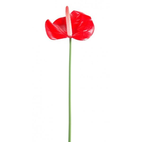 Anthurium mini artificiel 60cm fleur sur tige mat riel for Flowall pas cher