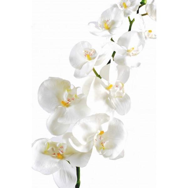 phalaenopsis large artificielle 100cm fleur sur tige mat riel mur v g. Black Bedroom Furniture Sets. Home Design Ideas