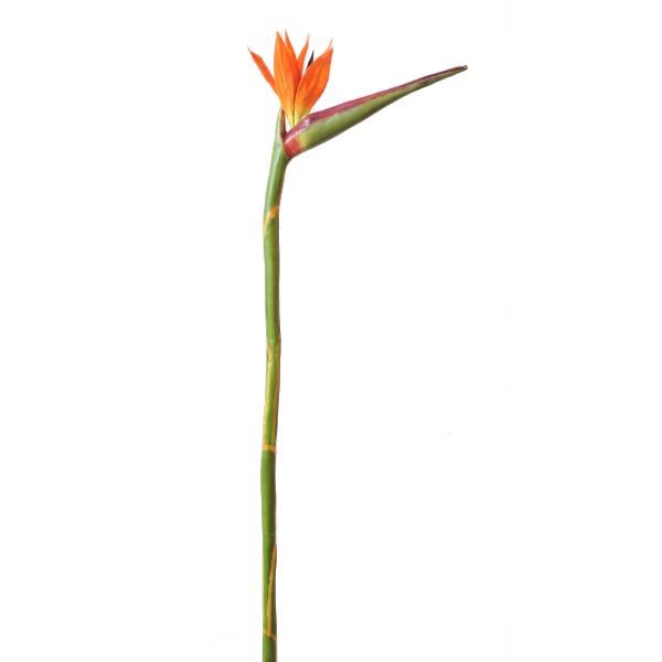Strelitzia artificiel 90cm fleur sur tige mat riel mur for Flowall pas cher