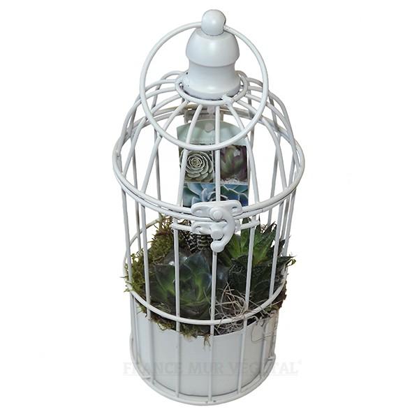 Cage v g tale avec plantes grasses suspendre mat riel for Flowall pas cher