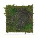 Cadre végétal stabilisé Tablo'Nature 30x30cm Ever Green