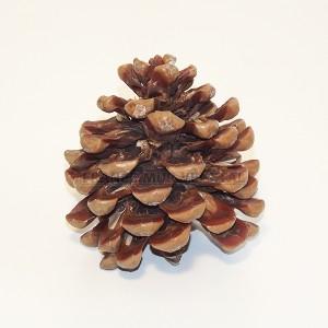 http://www.materiel-mur-vegetal.fr/1131-2184-thickbox/pomme-de-pin-o10cm-hauteur-12cm.jpg