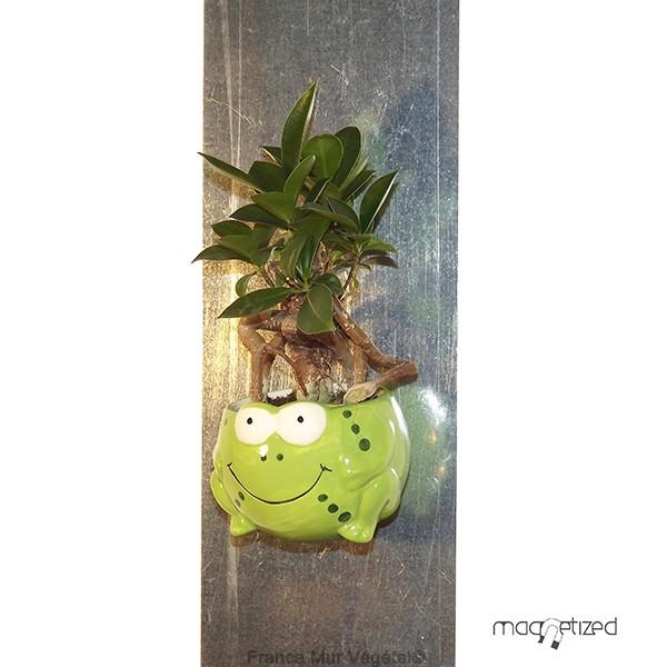 cache pot magn tique vert 8cm grenouille mat riel mur v g. Black Bedroom Furniture Sets. Home Design Ideas