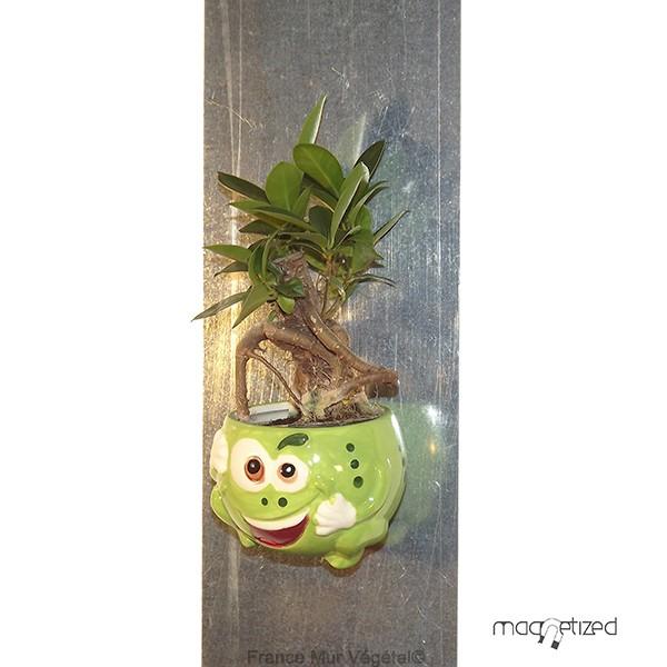 Cache pot magn tique vert 8cm grenouille mat riel mur for Flowall pas cher