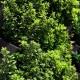 Kit mur végétal Vertiss Plus 80x60x20cm