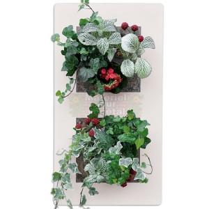 http://www.materiel-mur-vegetal.fr/1204-2404-thickbox/cadre-vegetal-double-vertical-blanc-54x30cm-garden-and-the-city.jpg