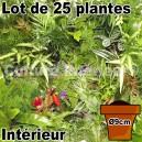 Lot de 25 plantes pot Ø9cm pour mur végétal intérieur