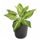 Aphelandra mini artificiel 30cm 14 feuilles sur pique