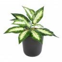 Dieffenbachia mini artificiel 30cm 14 feuilles sur pique
