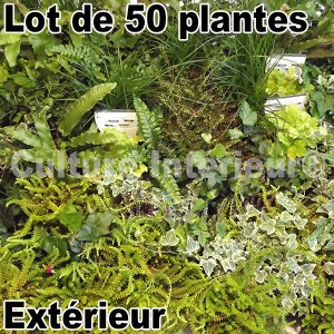 lot de 50 plantes pour mur v g tal ext rieur mat riel mur v g. Black Bedroom Furniture Sets. Home Design Ideas