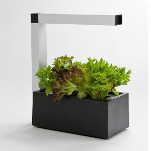 http://www.materiel-mur-vegetal.fr/1304-2656-thickbox/mini-potager-dinterieur-herbie-noir-20x40x44cm.jpg