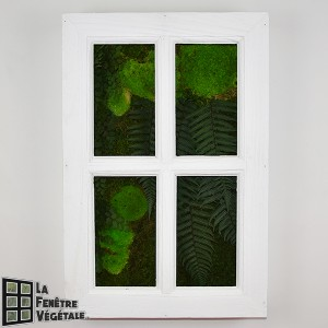 http://www.materiel-mur-vegetal.fr/1325-2727-thickbox/tableau-vegetal-stabilise-fenetre-vegetale-60x40cm-blanc.jpg