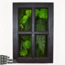 Tableau végétal stabilisé Fenêtre Végétale 60x40cm Noir