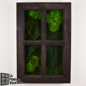 http://www.materiel-mur-vegetal.fr/1330-2742-thickbox/tableau-vegetal-stabilise-fenetre-vegetale-60x40cm-wenge.jpg