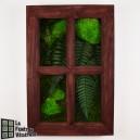 Tableau végétal stabilisé Fenêtre Végétale 60x40cm Acajou