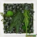 Tableau végétal stabilisé Tablo'Nature 30x30cm Green Eucalyptus