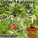 Lot de 10 plantes pot Ø9cm pour mur végétal intérieur