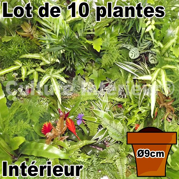 lot de 10 plantes pot 9cm pour mur v g tal int rieur mat riel mur v g. Black Bedroom Furniture Sets. Home Design Ideas