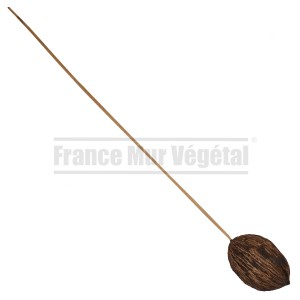 http://www.materiel-mur-vegetal.fr/1356-2833-thickbox/mintolla-sur-tige-en-bois-50cm.jpg