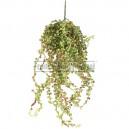 Callissia mini artificiel 55cm sur pique