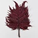 Fougère Rumohra stabilisée Rouge 10 feuilles