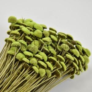 http://www.materiel-mur-vegetal.fr/1433-3188-thickbox/fleurs-stabilisees-botao-vert-citron.jpg