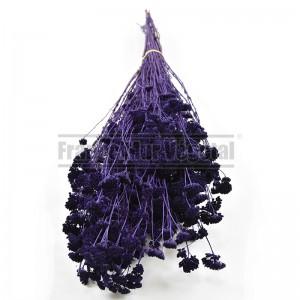 http://www.materiel-mur-vegetal.fr/1436-3195-thickbox/fleurs-stabilisees-achilea-violet.jpg