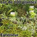 Lot de 100 plantes pour mur végétal extérieur