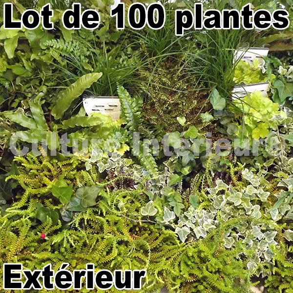 lot de 100 plantes pour mur v g tal ext rieur mat riel mur v g. Black Bedroom Furniture Sets. Home Design Ideas