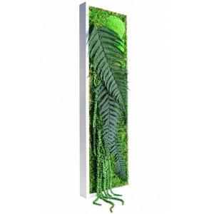 http://www.materiel-mur-vegetal.fr/379-742-thickbox/tableau-vegetal-stabilise-picagreen-slim-60x18cm.jpg