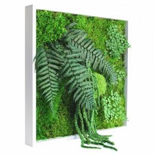 http://www.materiel-mur-vegetal.fr/380-744-thickbox/tableau-vegetal-stabilise-picagreen-40x40cm.jpg