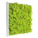 Tableau végétal stabilisé Lichen Vert Citron 40x40cm