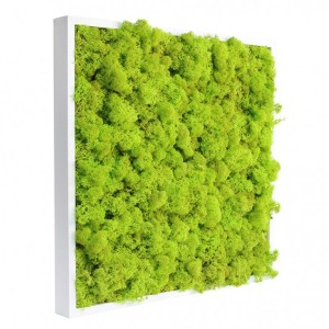 http://www.materiel-mur-vegetal.fr/392-768-thickbox/tableau-vegetal-stabilise-lichen-vert-citron-40x40cm.jpg