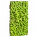 Tableau végétal stabilisé Lichen Vert Citron Rectangle 64x36cm
