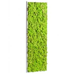http://www.materiel-mur-vegetal.fr/395-771-thickbox/tableau-vegetal-stabilise-lichen-vert-citron-demi-maxi-114x36cm.jpg
