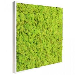tableau v g tal stabilis lichen vert citron 60x60cm mat riel mur v g. Black Bedroom Furniture Sets. Home Design Ideas