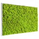 Tableau végétal stabilisé Lichen Vert Citron Maxi 114x64cm