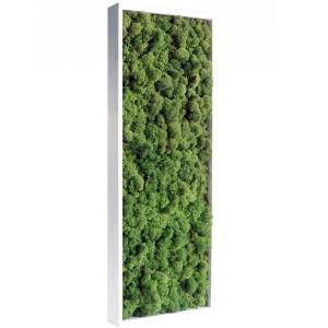http://www.materiel-mur-vegetal.fr/399-776-thickbox/tableau-vegetal-stabilise-lichen-vert-nature-slim-60x18cm.jpg