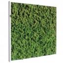 Tableau végétal stabilisé Lichen Vert Nature 60x60cm