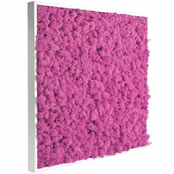 tableau v g tal stabilis lichen rose 60x60cm mat riel mur v g. Black Bedroom Furniture Sets. Home Design Ideas