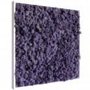 Tableau végétal stabilisé Lichen Violet 60x60cm