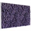 Tableau végétal stabilisé Lichen Violet Maxi 114x64cm