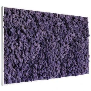http://www.materiel-mur-vegetal.fr/415-792-thickbox/tableau-vegetal-stabilise-lichen-violet-maxi-114x64cm.jpg